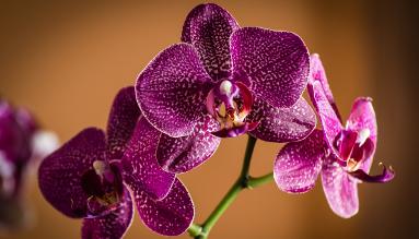 Букеты из орхидеи.