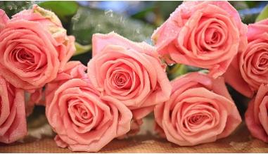 Букет из розовых роз.