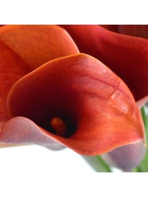 Букет цветов из оранжевых калл (9 штук) с доставкой.
