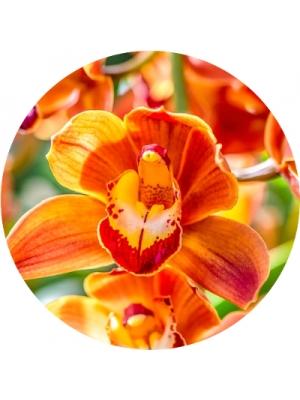 Доставка букетов из орхидеи Киев (193)
