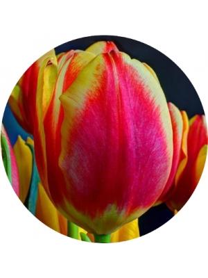 Букеты из тюльпанов (5)