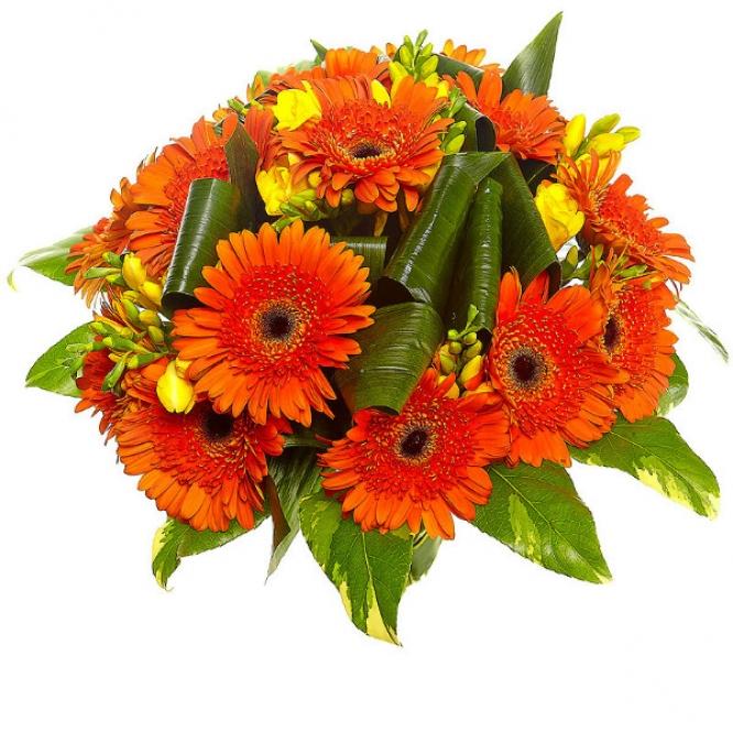 Букет цветов из рыжей герберы, желтой фрезии, пестрой аралии и аспидистр №16 с доставкой.