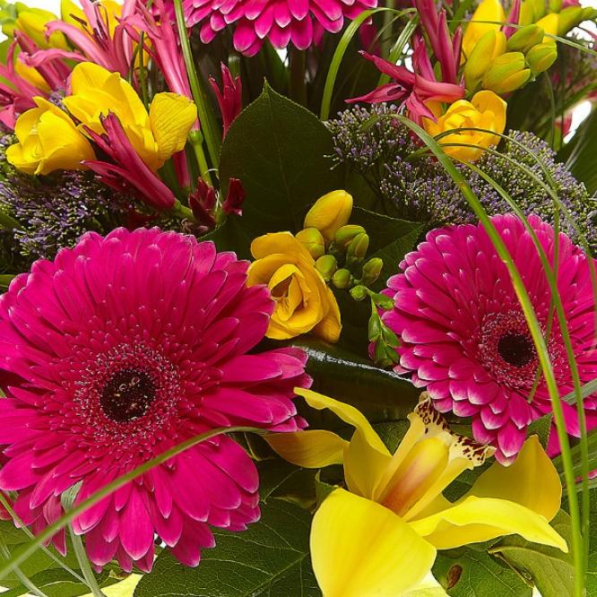 Букет цветов из малиновой герберы, желтой орхидеи, нерине, желтой фрезии и синего трахелиума №23 с доставкой.