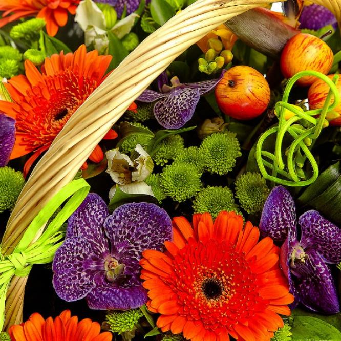 Букет-корзина из зеленой хризантемы, рыжей герберы, желтых фрезии и каллы, а также синей орхидеи №51