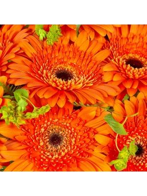 Букет цветов из рыжей герберы (15 шт.), салала, амбреллы и буплерума №5 с доставкой.