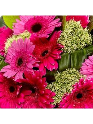 Букет цветов из розовой и малиновой герберы, белого трахелиума, салала и аспидистр №55 с доставкой.