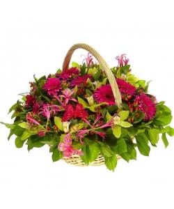 Букет-корзина из малиновой герберы, зеленой орхидеи, нерине, красного гиперикума и рускуса №54
