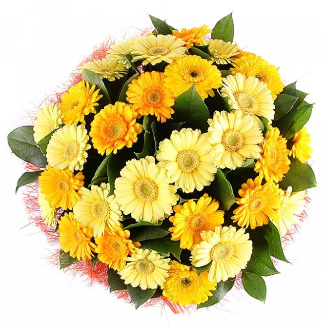 Букет цветов из желтой и кремовой герберы (31 шт.) и салала №65 с доставкой.