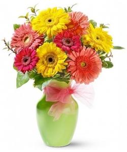 Букет цветов из разноцветной герберы (9 штук) и декоративной зелени с доставкой по Киеву.