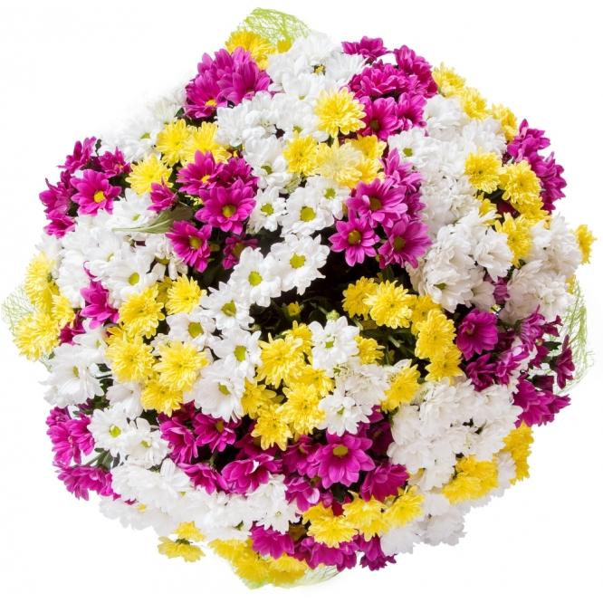 """Букет цветов из разноцветной хризантемы """"Сантини"""" (51 ветка) №9 с доставкой."""