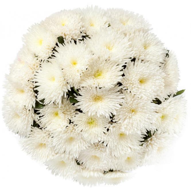 Букет цветов из белой хризантемы (51 шт.) №10 с доставкой.