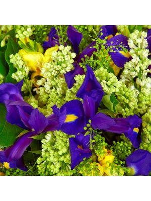 Букет цветов из синего ириса, желтой фрезии, белой сирени, теласпии, салала и пестрой аралии №14 с доставкой.