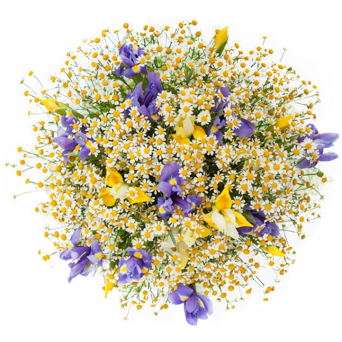 Букет цветов из синего и желтого ириса, а также полевых ромашек №15 с доставкой.