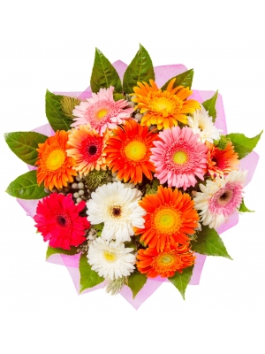 Букет цветов из разноцветной герберы (15 шт.), аралии, сильвер брунии и аспалантуса №59 с доставкой.