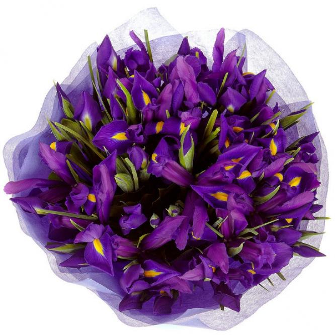 Букет цветов из синих ирисов (51 шт.) №2 с доставкой.