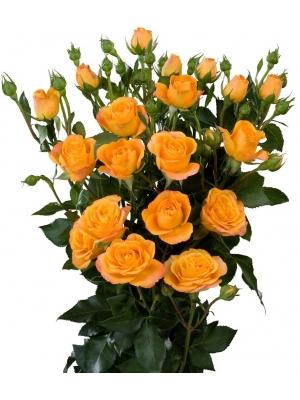 Поштучно желтые кустовые розы Abeba  (экстра класс, 70 сантиметров) с доставкой по Киеву.