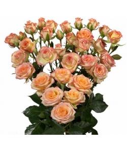 Поштучно розово-кремовые кустовые розы Alexine (экстра класс, 70 сантиметров) с доставкой по Киеву.