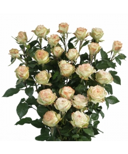 Поштучно кустовые розы Arti (экстра класс, 70 сантиметров) с доставкой по Киеву.