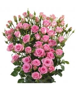 Поштучно розовые кустовые розы Britney (экстра класс, 70 сантиметров) с доставкой по Киеву.