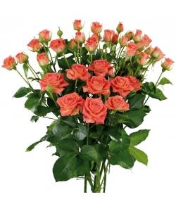 Поштучно кустовые розы Charming Babe (экстра класс, 70 сантиметров) с доставкой по Киеву.