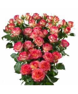Поштучно кустовые розы Colleen Spray (экстра класс, 70 сантиметров) с доставкой по Киеву.