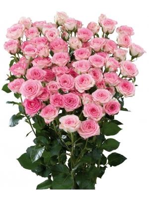 Поштучно розовые кустовые розы Creamy Twister (экстра класс, 70 сантиметров) с доставкой по Киеву.