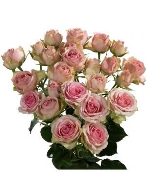 Поштучно светло-розовые кустовые розы Dinara (экстра класс, 70 сантиметров) с доставкой по Киеву.