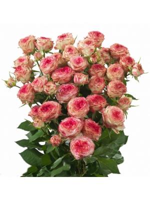 Поштучно кустовые розы Eyeopener (экстра класс, 70 сантиметров) с доставкой по Киеву.
