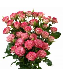 Поштучно кустовые розы Haley Spray (экстра класс, 70 сантиметров) с доставкой по Киеву.