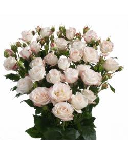 Поштучно кустовые розы Happy Wedding (экстра класс, 70 сантиметров) с доставкой по Киеву.