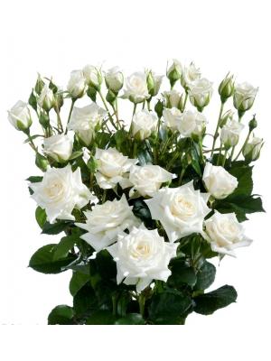 Поштучно кустовые розы Jeanine (экстра класс, 70 сантиметров) с доставкой по Киеву.