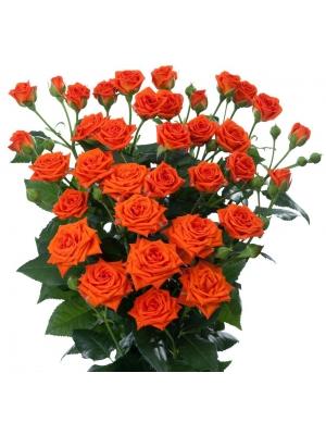 Поштучно оранжевые кустовые розы Jezebel (экстра класс, 70 сантиметров) с доставкой по Киеву.