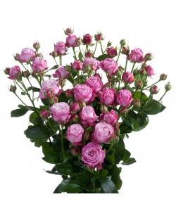 Поштучно кустовые розы Lady Bombastic  (экстра класс, 70 сантиметров) с доставкой по Киеву.