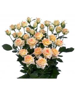 Поштучно кустовые розы Lenne (экстра класс, 70 сантиметров) с доставкой по Киеву.