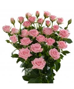 Поштучно кустовые розы Odilia (экстра класс, 70 сантиметров) с доставкой по Киеву.