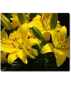 Поштучно ветка желтой лилии с доставкой №17
