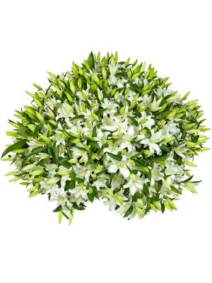 Букет-корзина из белой лилии (101 шт.) №73