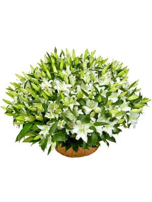 Букет-корзина из белой лилии (51 шт.) №74