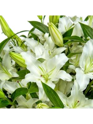 Букет-корзина из белой лилии (25 шт.) №75