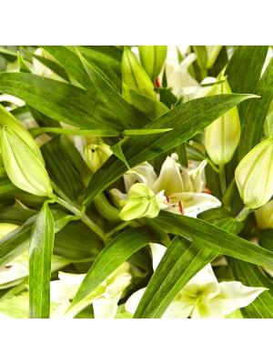 Букет цветов из белой лилии (51 шт.) №3 с доставкой.