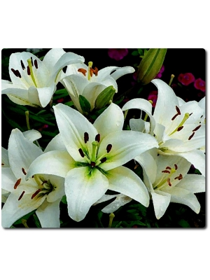 Поштучно ветка белой лилии с доставкой №16