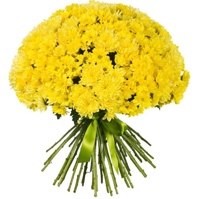 Букет цветов из желтой кустовой хризантемы двух видов (51 ветка) с доставкой по Киеву.