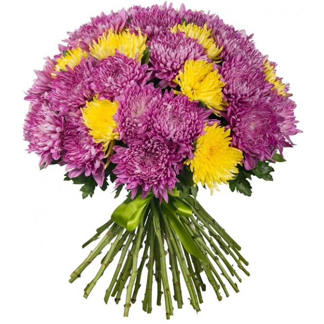 Букет цветов из желтой и фиолетовой однобутоновой хризантемы (51 штука) с доставкой по Киеву.
