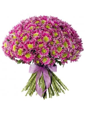 Букет цветов из бело-фиолетовой веточной хризантемы (51 ветка) с доставкой по Киеву.