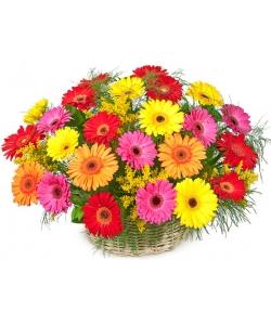 Корзина цветов из разноцветной герберы (25 штук) и декоративной зелени с доставкой по Киеву.