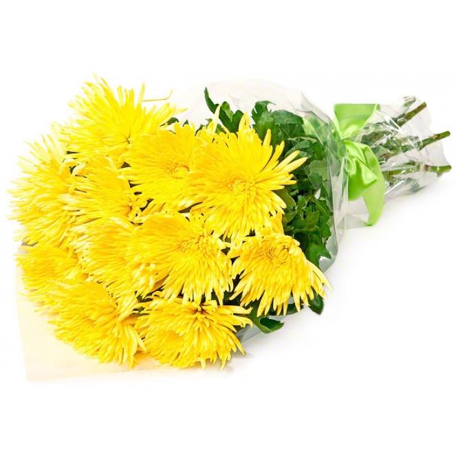 Букет цветов из желтой однобутоновой хризантемы (экстра класс, 15 штук, 75 сантиметров) и декоративной зелени с доставкой.