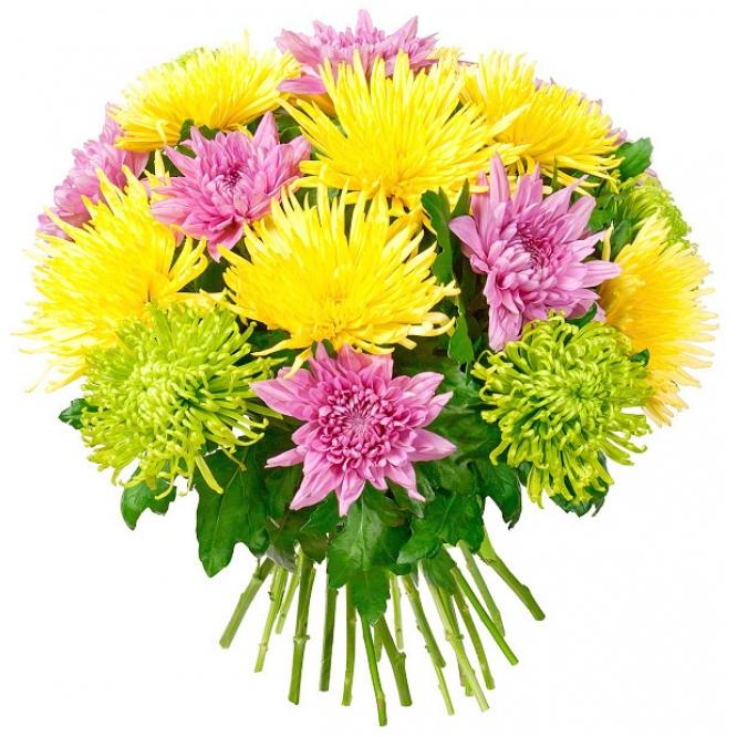 Хризантемы цветов и цены