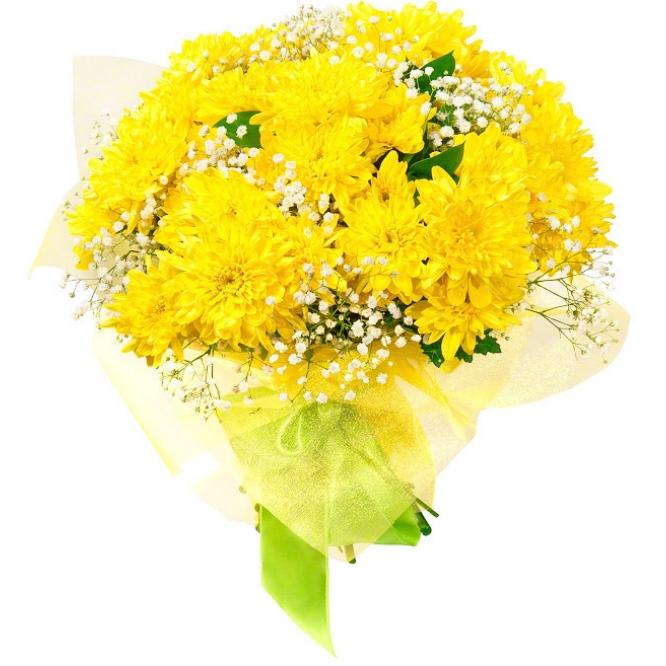 Букет цветов из желтой кустовой хризантемы (экстра класс, 7 веток, 75 сантиметров), гипсофилы и зелени с доставкой.