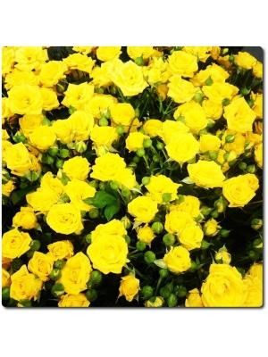 Яркие желтые кустовые розы с доставкой по Киеву.