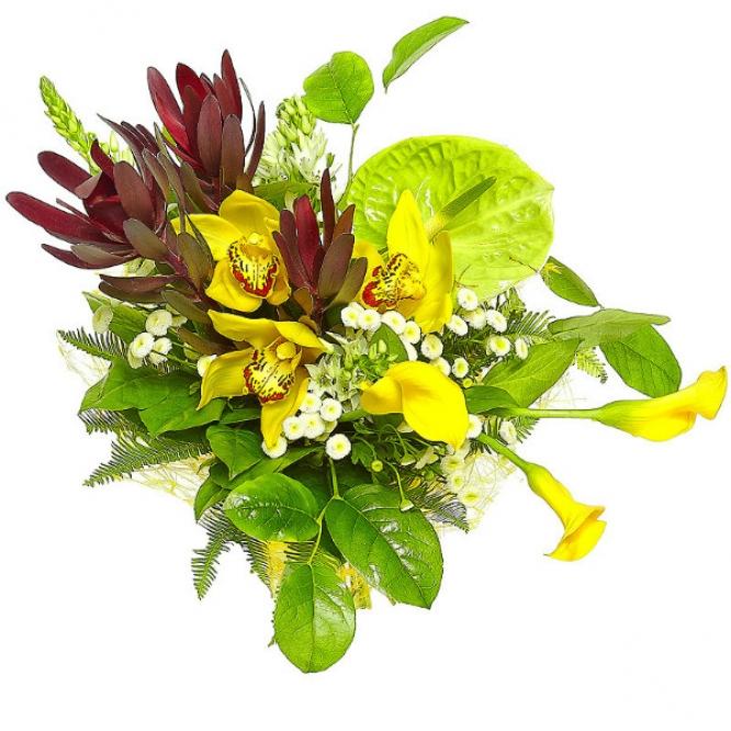 Букет цветов из желтой орхидеи, красного леукодендрона, зеленого антуриума, абреллы и желтой каллы №22 с доставкой.